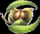 Growing Healing Herbs for the Home Garden – Elderberry, Lemon Balm & Rose Chestnut_logo